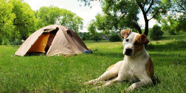 dog-tents